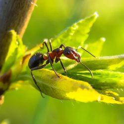 hilft compo bi 58 gegen ameisen?