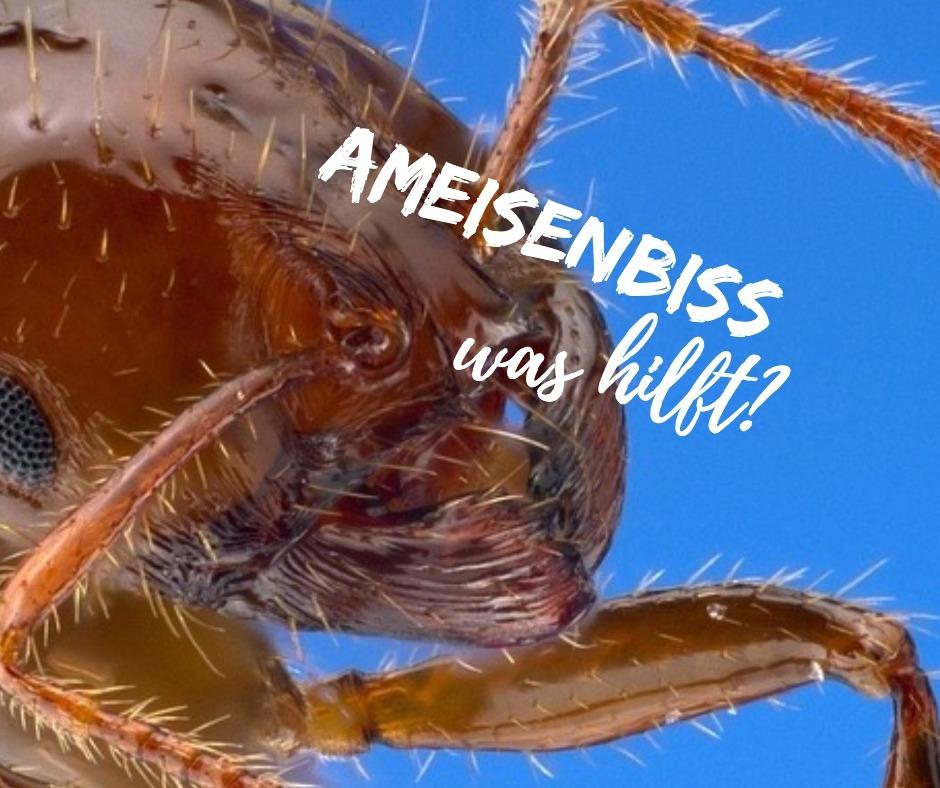 ameisenbiss hausmittel