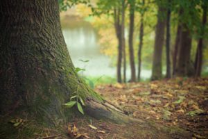 Forstpflanze – Wald verjüngen.
