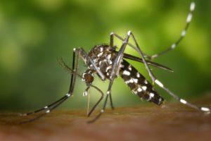 Spray gegen Insekten