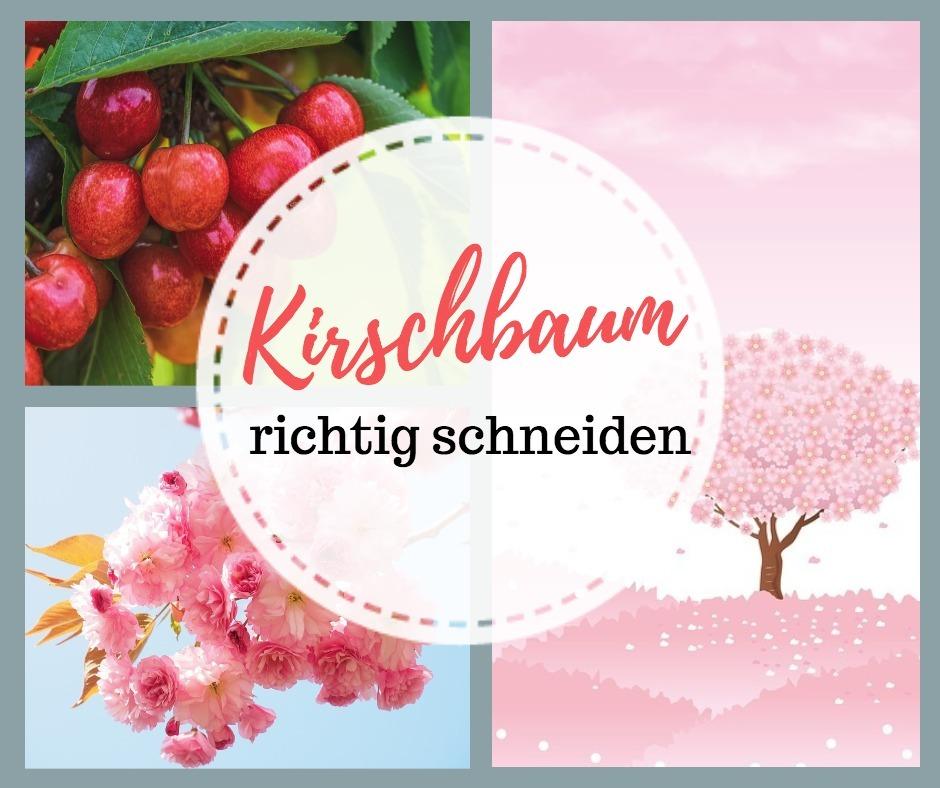 kirschbaum wie schneiden