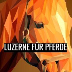 luzerne pferd