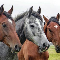 kristallkraft pferdefutter