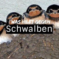 schwalbenabwehr