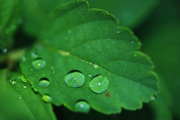 wie funktioniert tröpfchenbewässerung