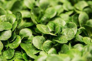 Feldsalat Avocado Smoothie – Dein Rezept