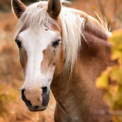sattel pferd