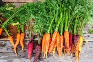 Die Vorzüge eines Bio Gartens