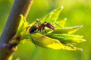 Weshalb Backpulver gegen Ameisen keine gute Idee ist!