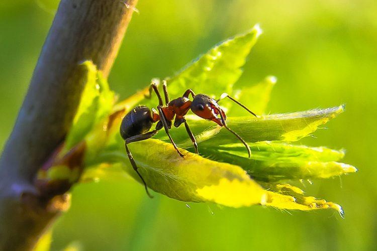 backpulver gegen ameisen