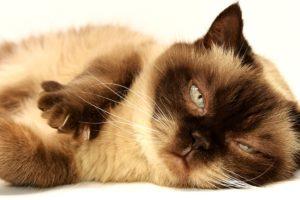 Katzenurin entfernen. Mit diesen Tipps klappts!