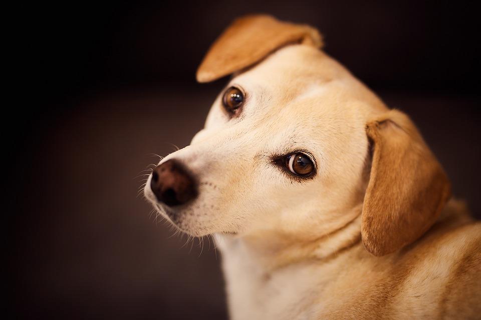 hunde urin geruch entfernen
