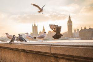 Heimische Vögel bestimmen mit Bildern!