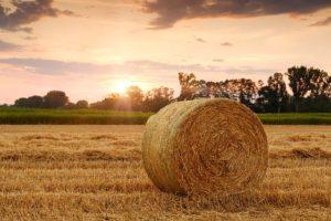 Ausbildung Landwirtschaft
