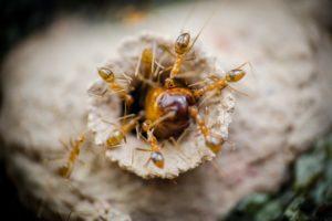 Ameisennest finden