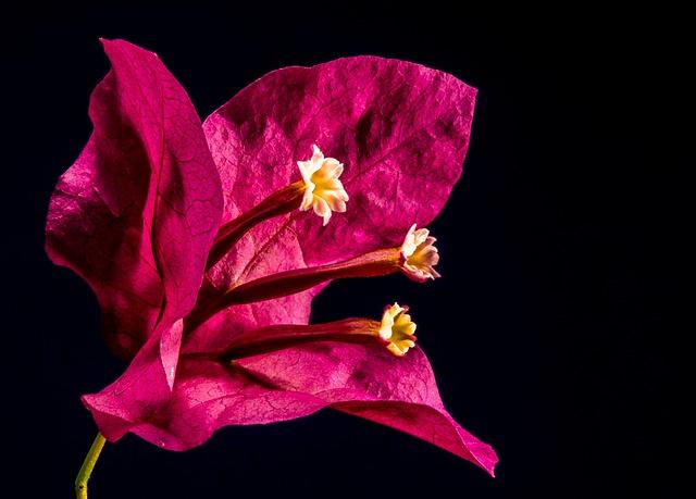 Blühende Kletterpflanzen