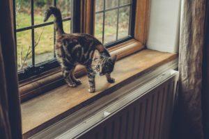 Ist ein Katzenlaufrad sinnvoll oder nicht?