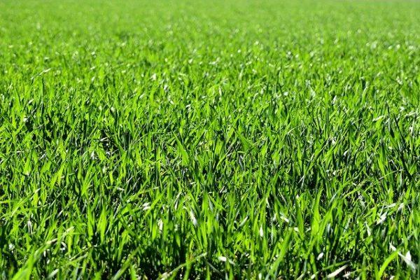 Kante Rasen