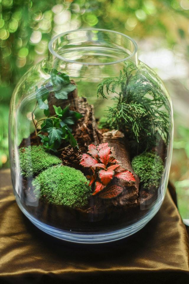 Terrarium in der Flasche