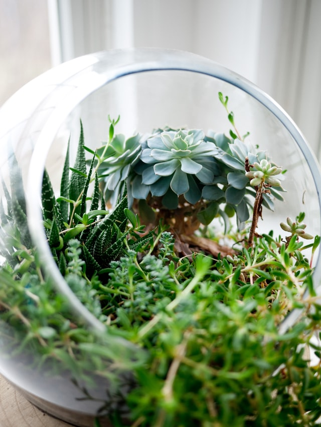 Pflanzenterrarium