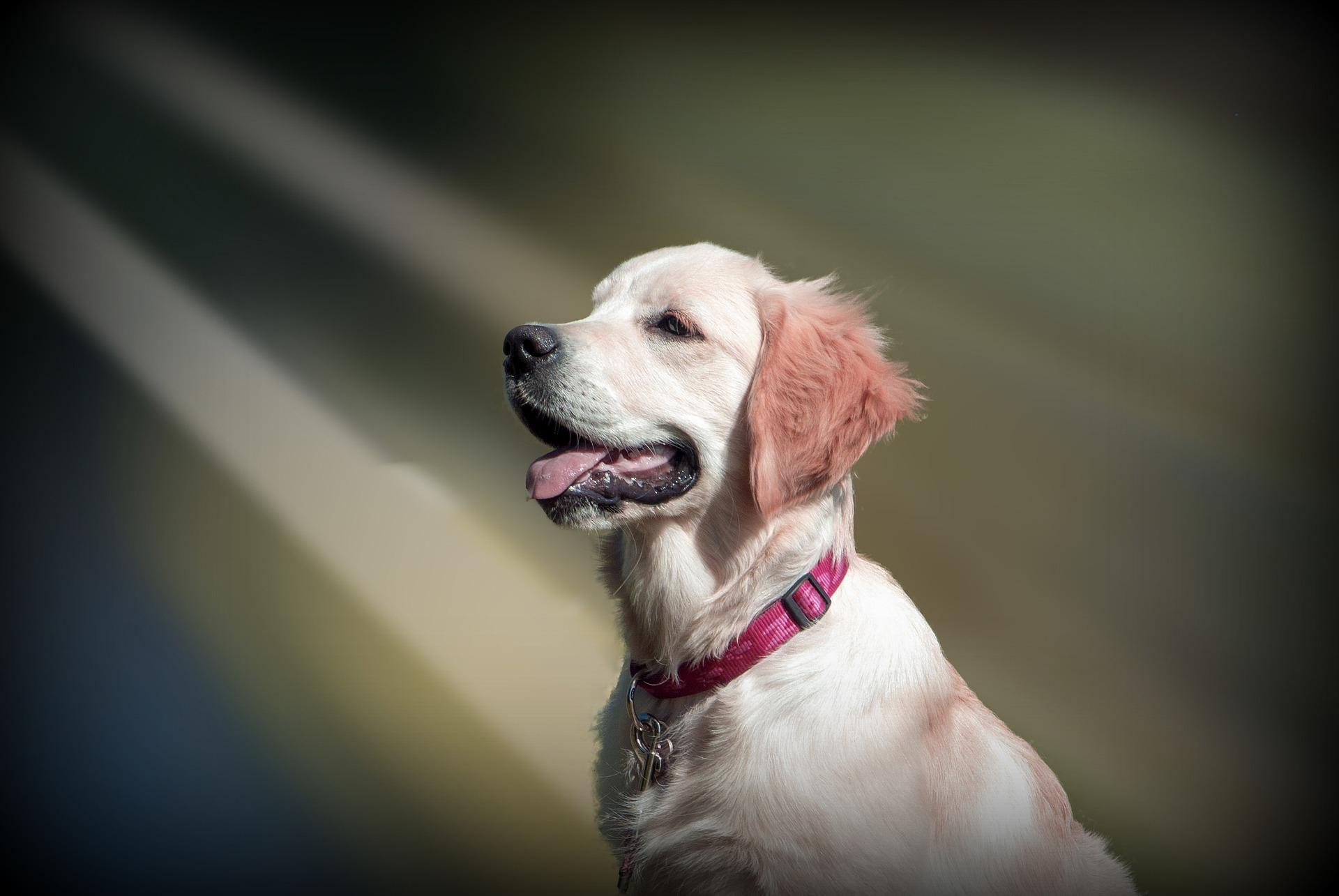 reiseapotheke hund